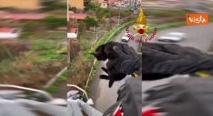 Gattino bloccato sulla tangenziale, lo salvano i vigili del fuoco VIDEO