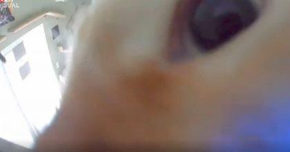 Gatto scopre la telecamera nascosta nel gattile: la scena divertente VIDEO