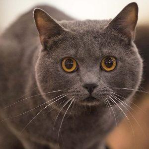 Chi ha detto che i gatti non si affezionano al padrone sbaglia di grosso