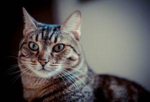 Un gatto, Ansa