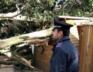 Iglesias, vento abbatte un albero sul mercatino di Natale: strage sfiorata