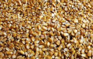 Savigliano (Cuneo), essiccatore di mais è troppo rumoroso: risarcimento da 900mila euro ad una famiglia