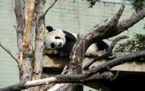 Lo zoo in Bretagna acquistato in rete: la colletta della Ong per liberare 560 animali