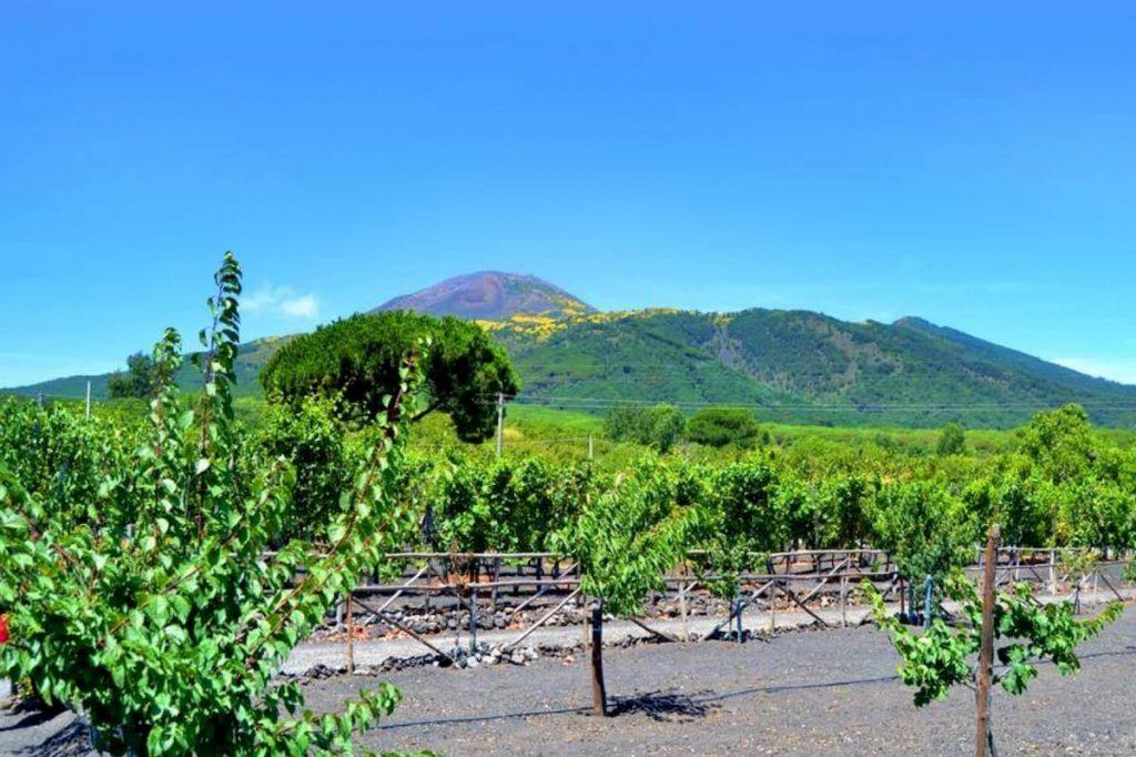 I vini dei suoli vulcanici del Vesuvio a Milano con Loro di Napoli