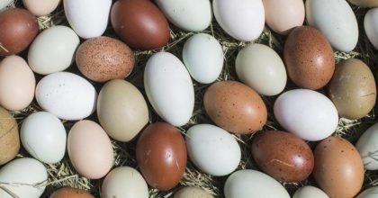 Cina, uova di 500 anni fa intatte trovate nel vaso nella tomba della dinastia Ming