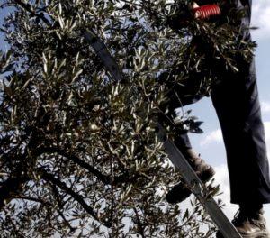 """Custonaci (Trapani), il figlio morì potando un albero. La madre: """"L'ho perso per 10 euro"""""""