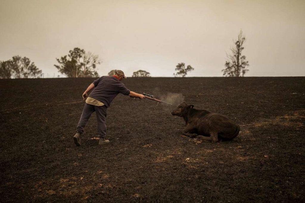 animali morti australia per incendi