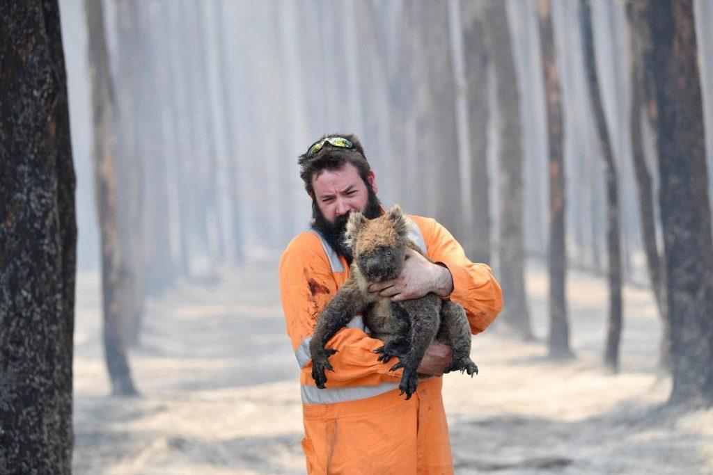 australia incendi koala