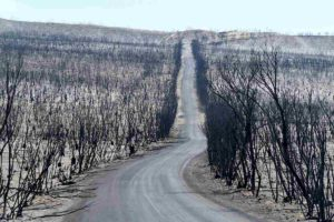 australia incendi strada