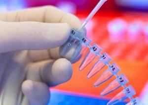Cancro, scoperto il Dna a fiore: proteggerlo può prevenire i tumori