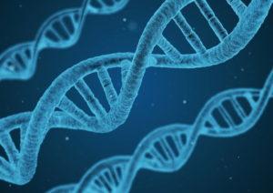 Longevità, geni nei vermi aumentano la vita fino a 500 anni