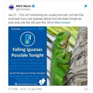 iguana cade albero florida