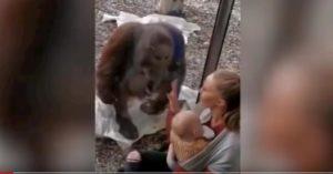 orango-mamma-allattare