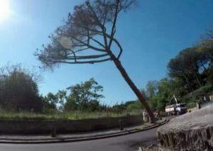 Napoli, Posillipo senza i suoi pini: centinaia di alberi abbattuti lungo la passeggiata da cartolina