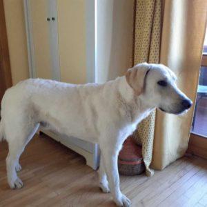 Cane era disperso da 59 giorni, ritrovato a 50 km da casa