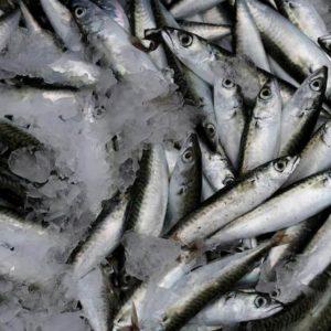 Sardine +15%. Sondaggio? No, boom vendite sui mercato del pesce