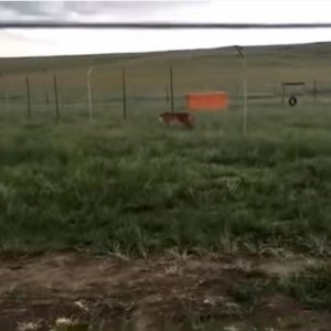 sudafrica tigre