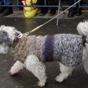 Troppi escrementi di cane sui marciapiedi, a Bolzano arriva l'esame del Dna