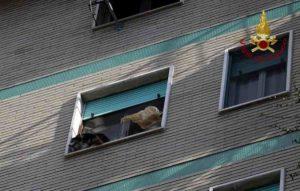 Milano, vento spalanca finestra: cagnolino in bilico sul davanzale al sesto piano. Salvato dai pompieri
