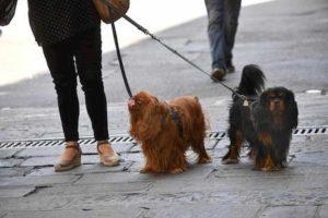 Vicenza, 13enne non raccoglie la cacca del cane: anziano gliela spalma in faccia