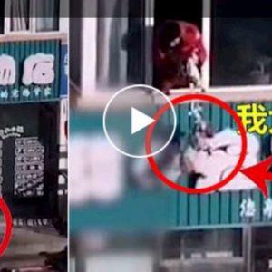 Coronavirus, i cinesi in quarantena calano i cani dal balcone per portarli a spasso