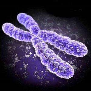 Trapianto di cromosoma per correggere malattie genetiche rare