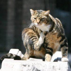Gatti, Ansa