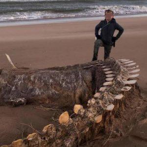 Mostro di Loch Ness, misterioso scheletro ritrovato in Scozia. E' di Nessie?