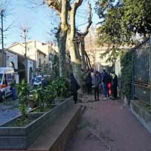 Maltempo vento e mareggiate: uomo ucciso da albero a Cava de Tirreni