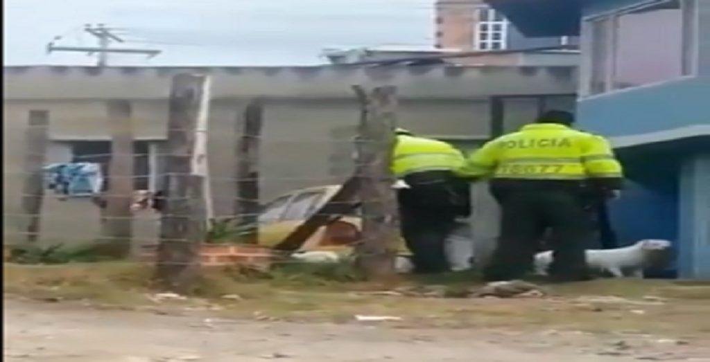 pitbull polizia colombia