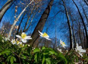 Previsioni meteo: quasi primavera fino a martedì, poi torna il freddo