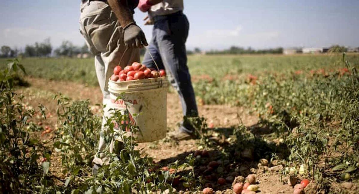 Frutta, pomodori, verdure: mancano 200mila braccianti per la raccolta nei campi