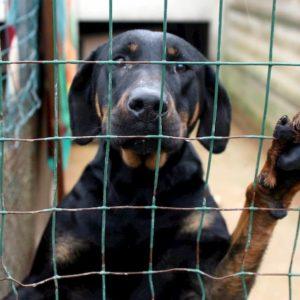 Coronavirus, oltre duemila cani abbandonati con la scusa dell'emergenza