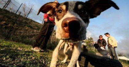 """I cani potrebbero per """"fiutare"""" il coronavirus: il loro olfatto per riconoscere gli asintomatici"""