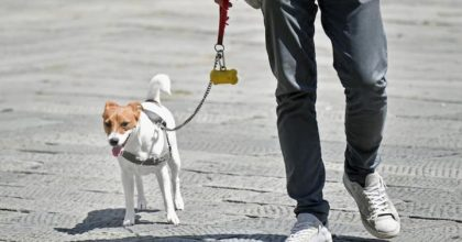 """Coronavirus, a Pomeriggio 5 """"candeggina per disinfettare zampe cani"""". Veterinari in rivolta"""