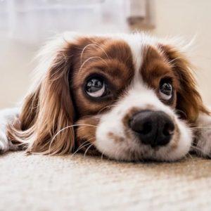 Coronavirus, portare il cane si può. Aperti i negozi per gli animali