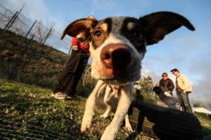 Coronavirus, le regole di comportamento per i cani di Aidaa