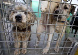 Coronavirus, boom di richieste di cani. Ma il decreto blocca le adozioni