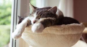 Gatti, zampe bianche come calzini: ecco perché le hanno
