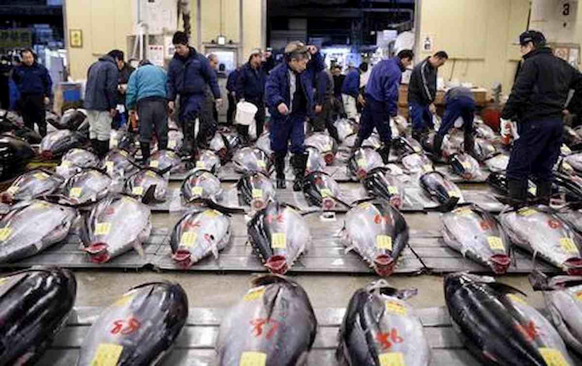 Spigole e orate di mare ormai cibo esotico: solo 7/8 per cento, il resto da allevamento