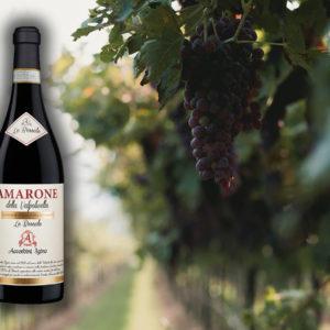 Mercato del vino, la Valpolicella sugli scudi con Ripasso e Amarone
