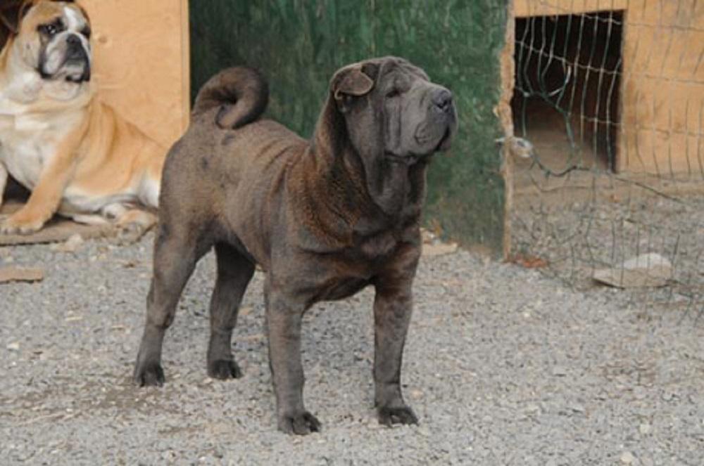 Tricase (Lecce), bimbo di 8 mesi morto azzannato alla testa dal cane di famiglia