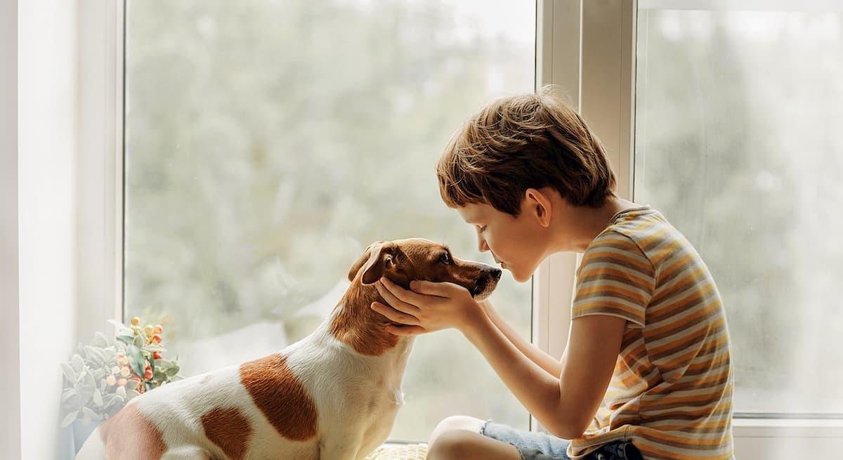 """Coronavirus, Iss: """"Cani e gatti a rischio contagio, tenerli lontani dal padrone infetto"""""""