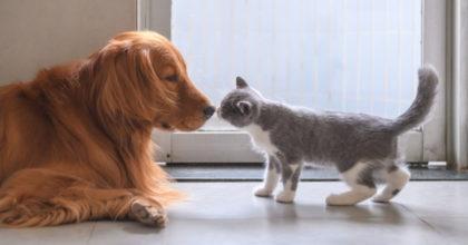 Carne cani e gatti, consumo vietato a Shenzen in Cina dopo il coronavirus