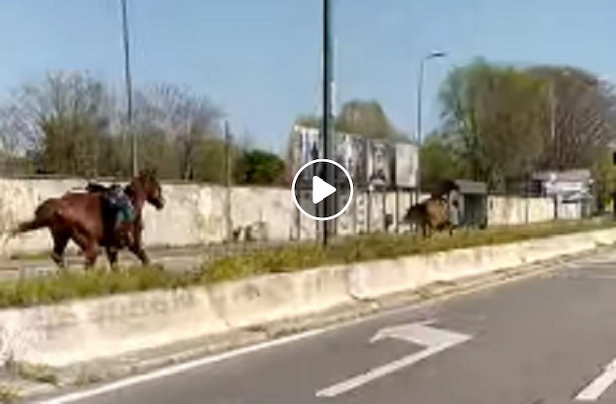 cavalli corsa milano linate