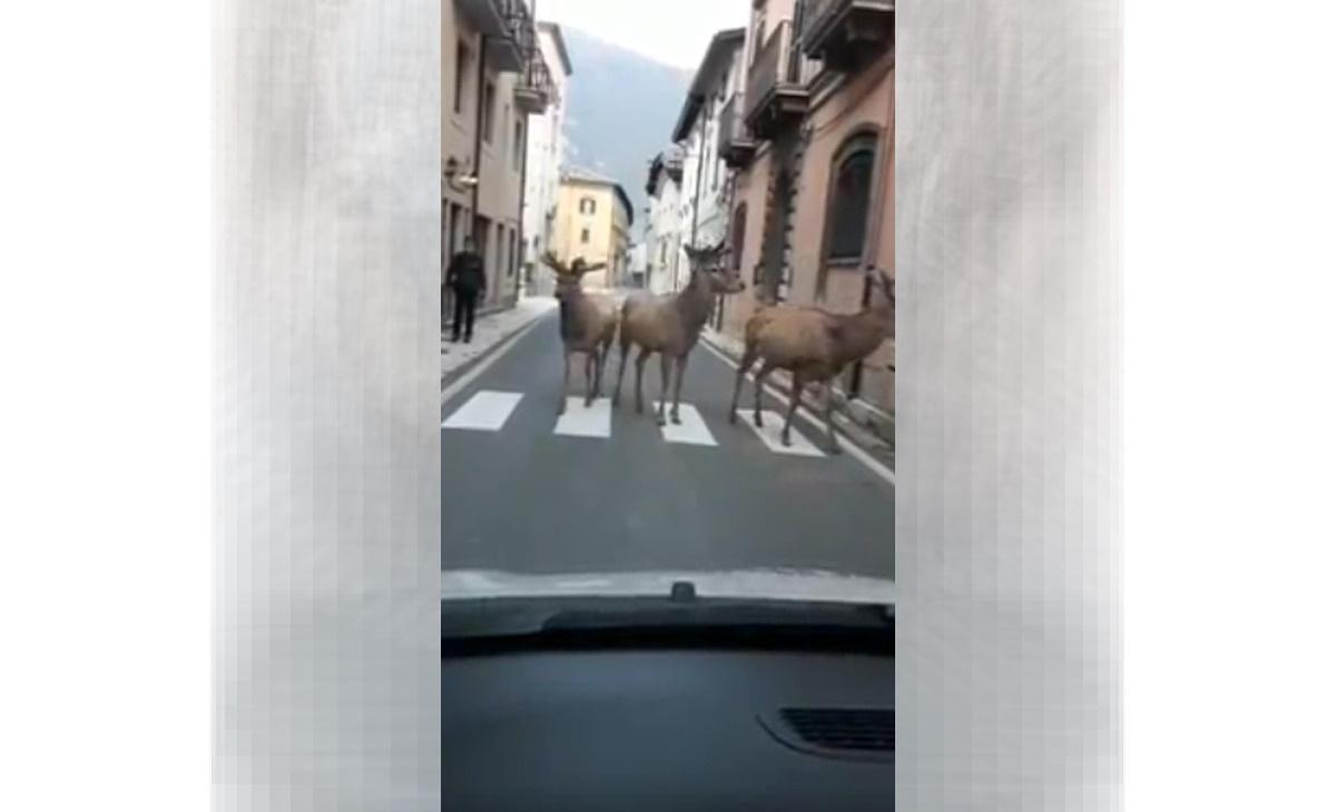 Abruzzo cervi passeggiano a Villetta Barrea deserta per coronavirus