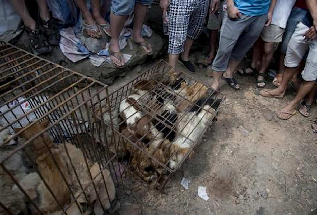 Cina, cani e gatti non si possono più mangiare: esclusi dalla lista degli animali commestibili