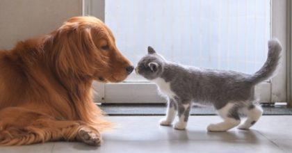 Coronavirus e animali domestici. Il botta e risposta tra Burioni e Rita Dalla Chiesa