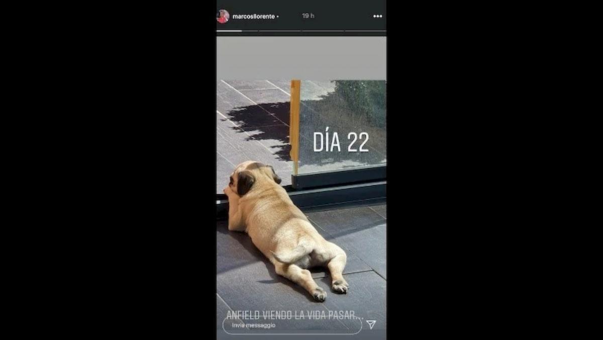 Marcos Llorente ha chiamato il cane Anfield dopo la doppietta a Liverpool