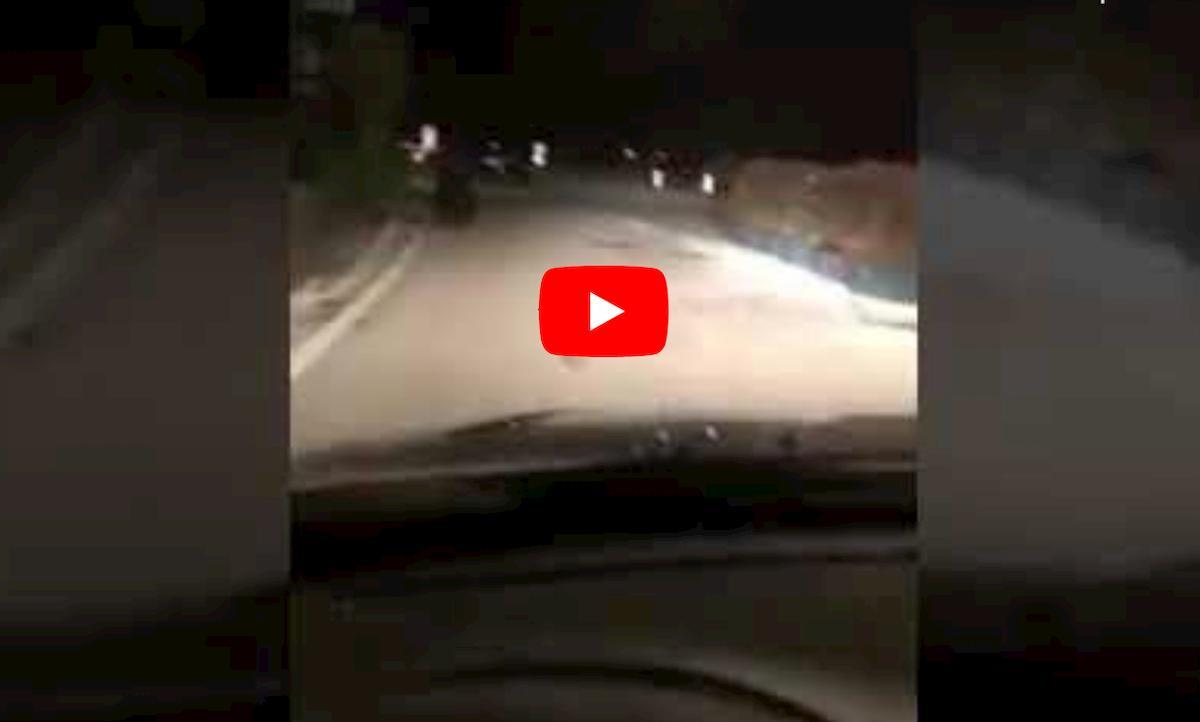Trentino, orso vicino alle case a Nago: automobilista lo insegue di notte VIDEO